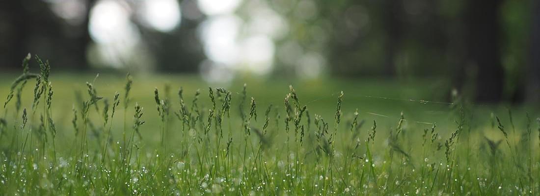camping-lolotte-natuur-gras