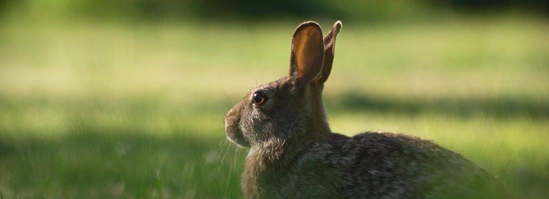 camping-lolotte-natuur-konijn