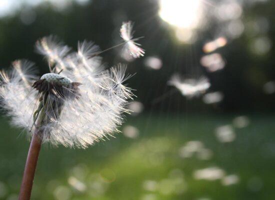 camping-lolotte-natuur-bloem
