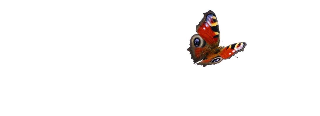 camping-lolotte-natuur-vlinder